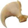 Dráp: 5 cm (Puma americká)