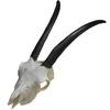Lebka antilopy
