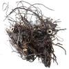 Tužebník jilmový: kořen