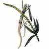 semínka: Rýt barvířský